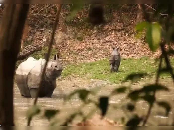 mother rhino