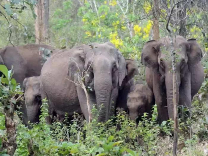 Thrissur Wild Elephant Attack