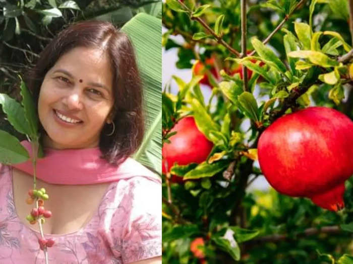 anar pomegranate peel good for heart skin hair and sore throat as per expert know its health benefits
