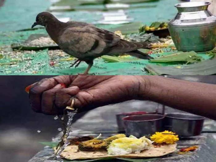 pitru paksha 2021 पितृपक्ष :श्राद्धात कावळा का महत्त्वाचा,यामुळे कावळ्याला देतात अन्न जाणून घ्या