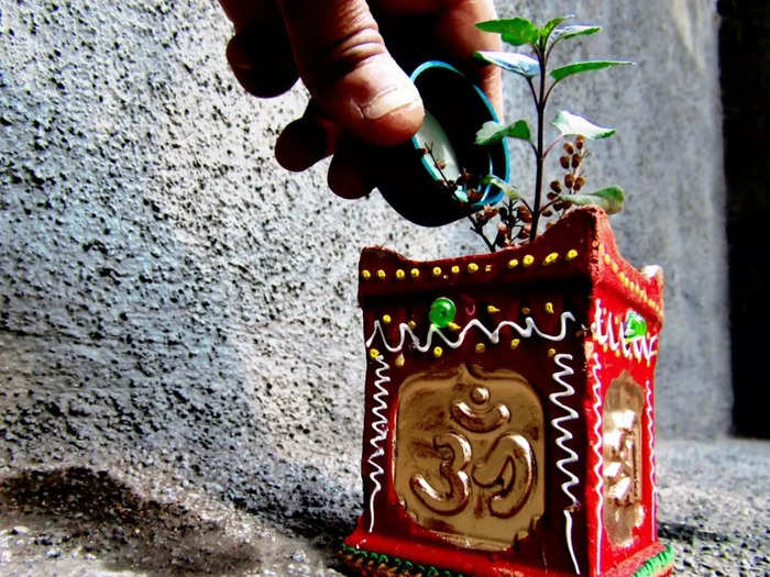diabetes management basil or tulsi leaves significantly lowers blood sugar levels