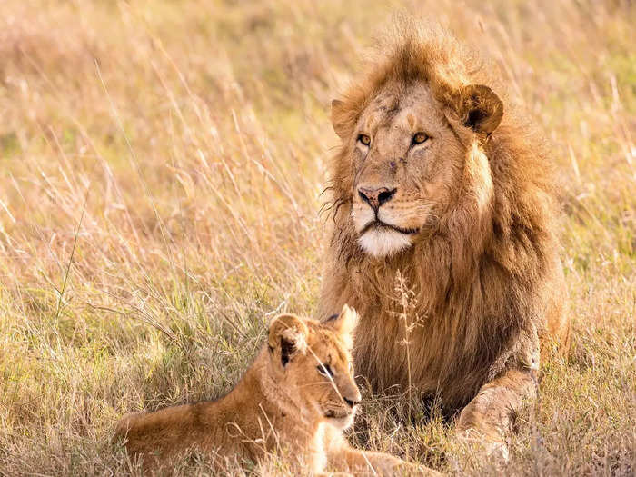 things to do in gir national park in hindi